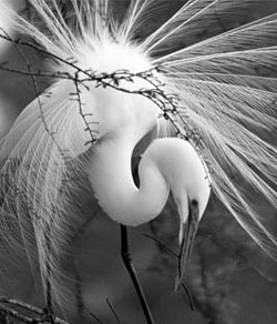 black and white photo of a crane